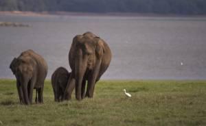 Karthikdwarakanathasianelephants Oct082015