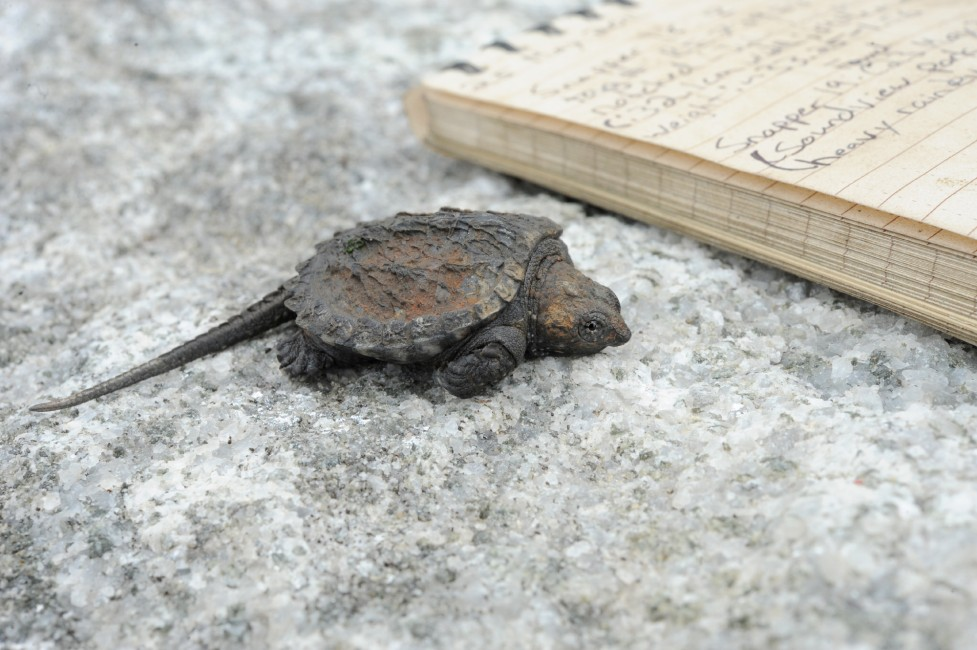Turtle Tally