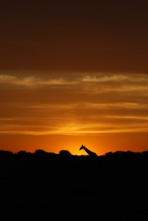 Sundowner in Africa