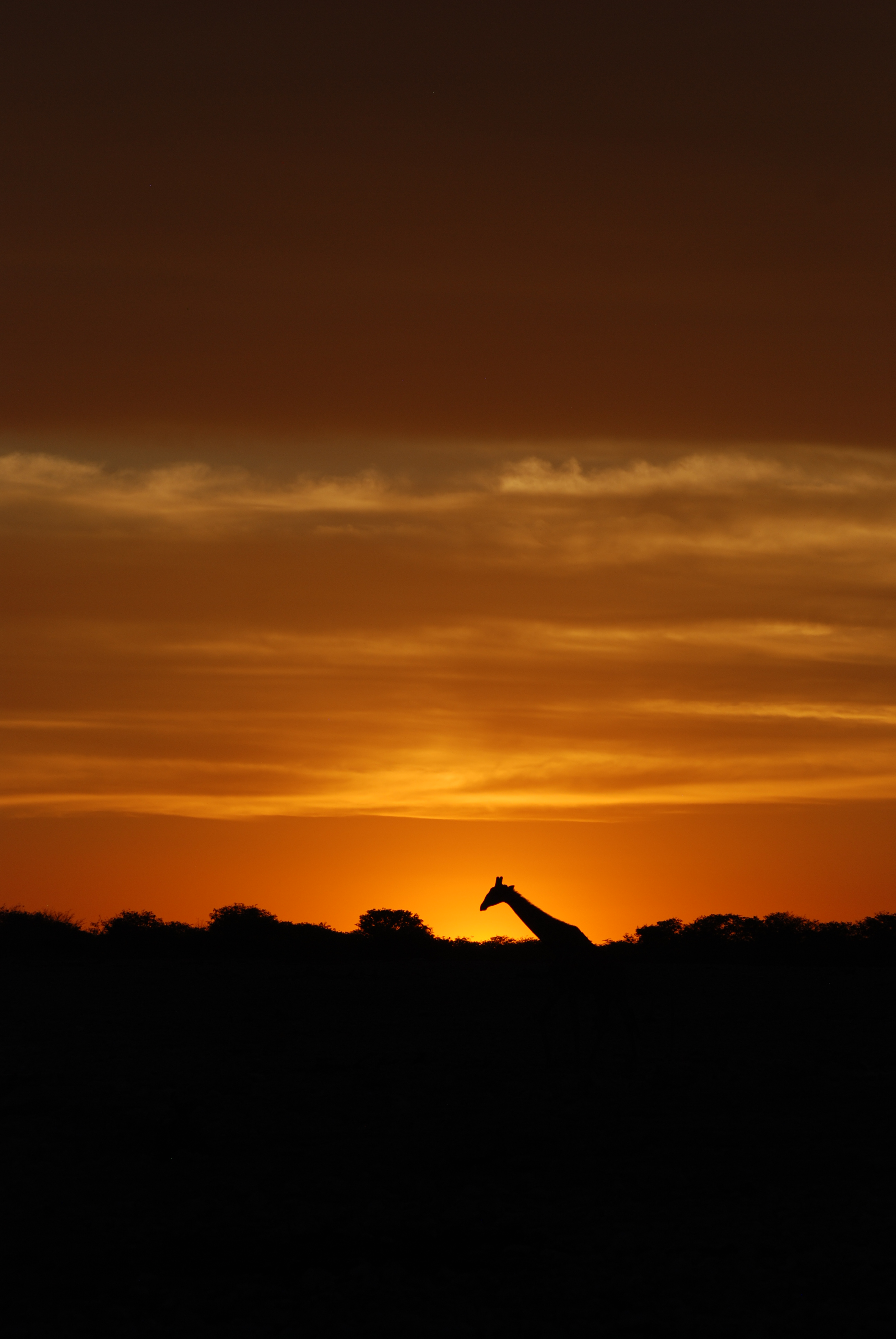 Sundowner in Africa