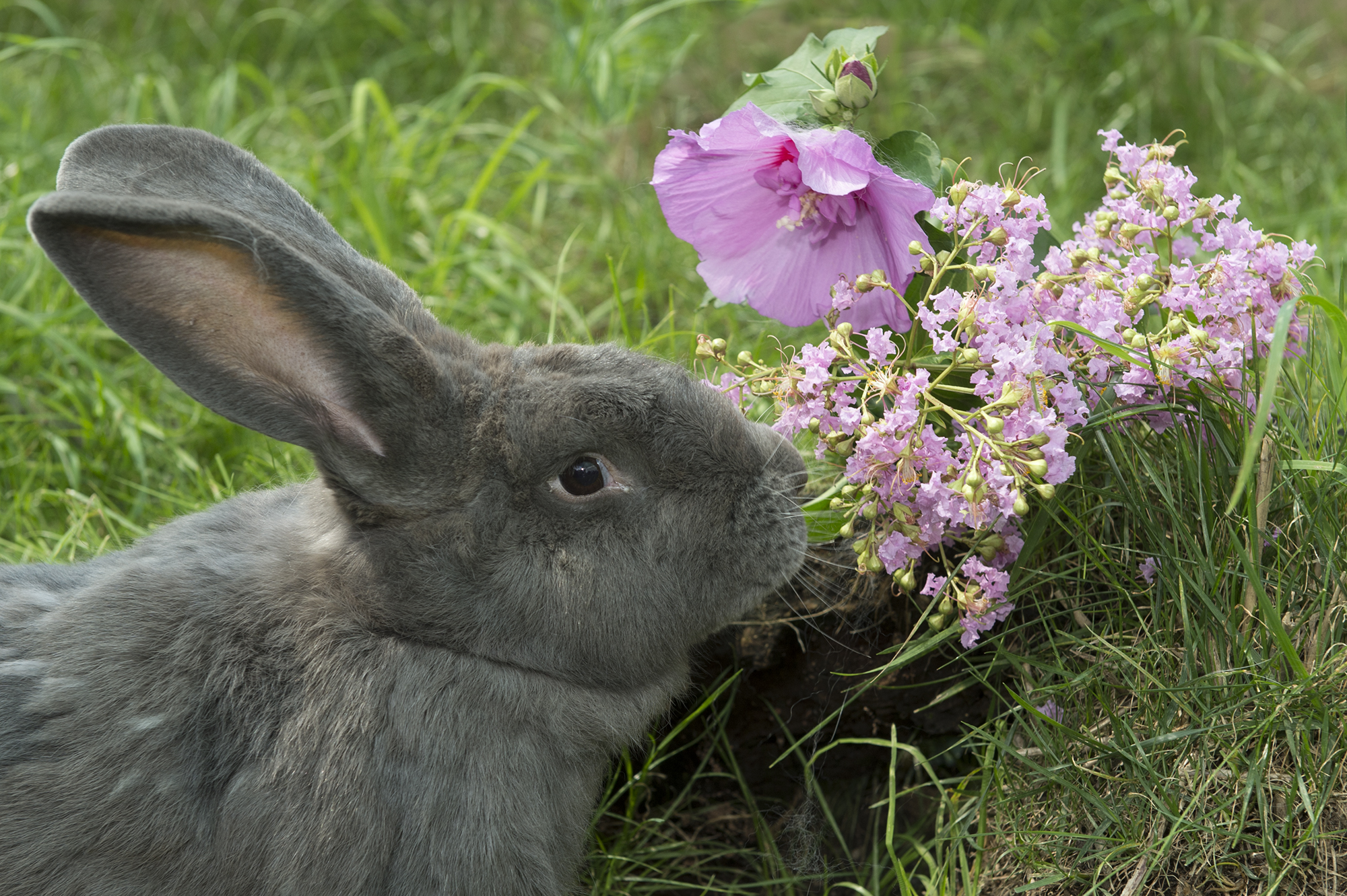 International Rabbit Day – Likeable Lagomorphs