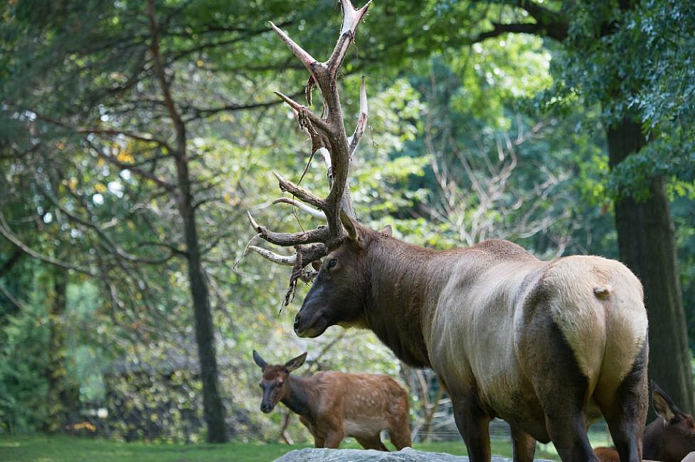 North American Natural Heritage