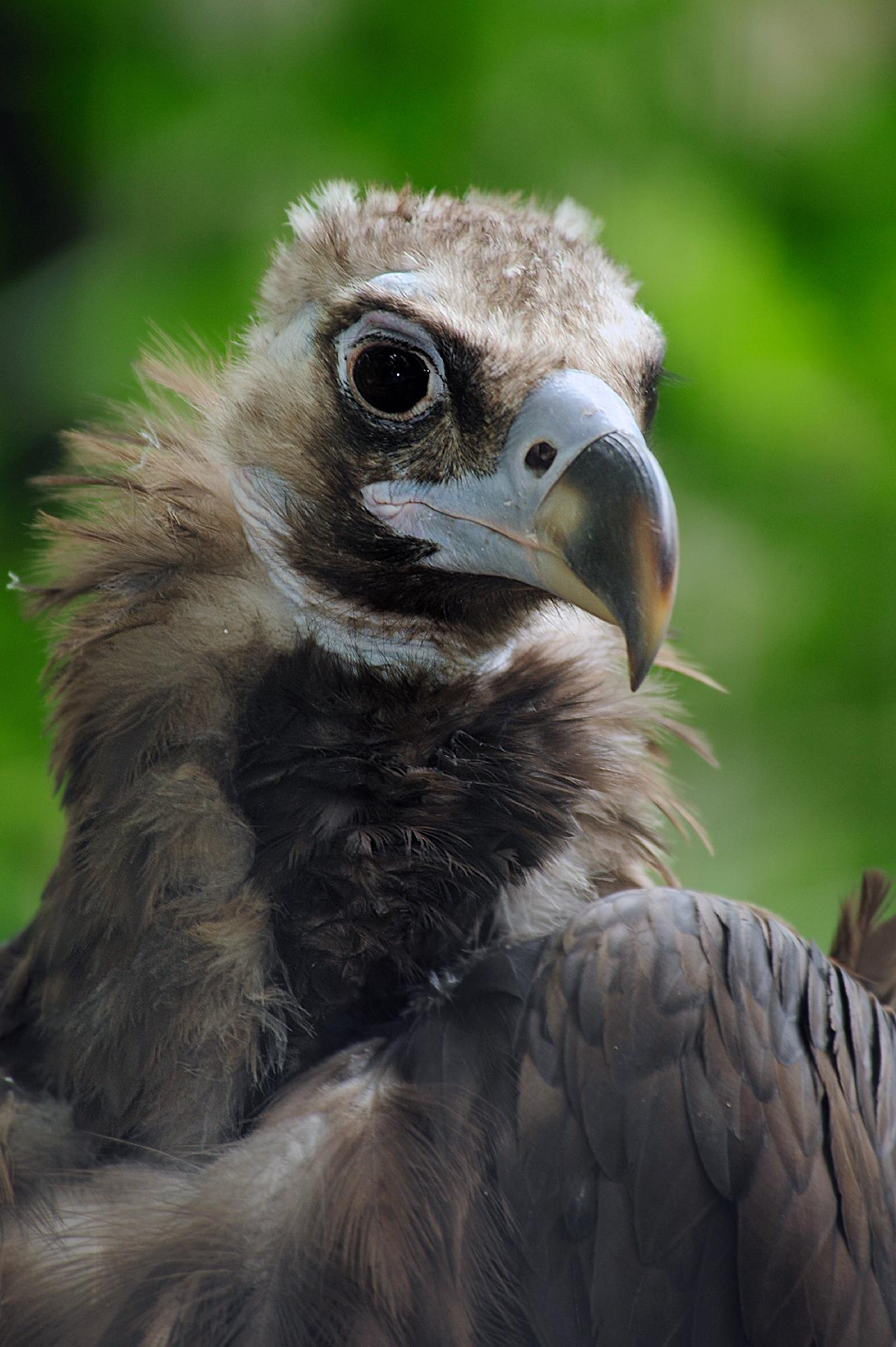 Celebrate Vulture Awareness Day