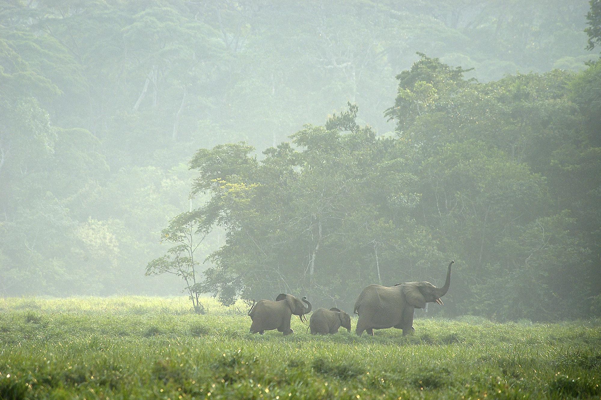 World Elephant Day – Mouadje, Are You Still Alive?