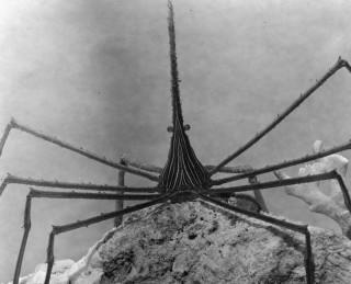 Creepy Crustacean of Yore