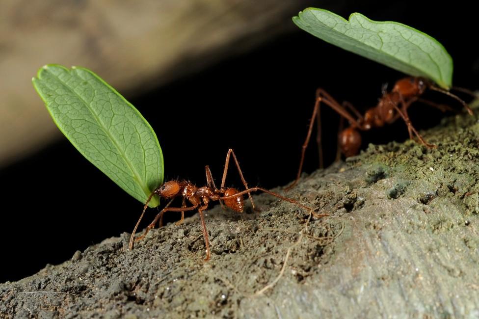 Creepy Crawlers?
