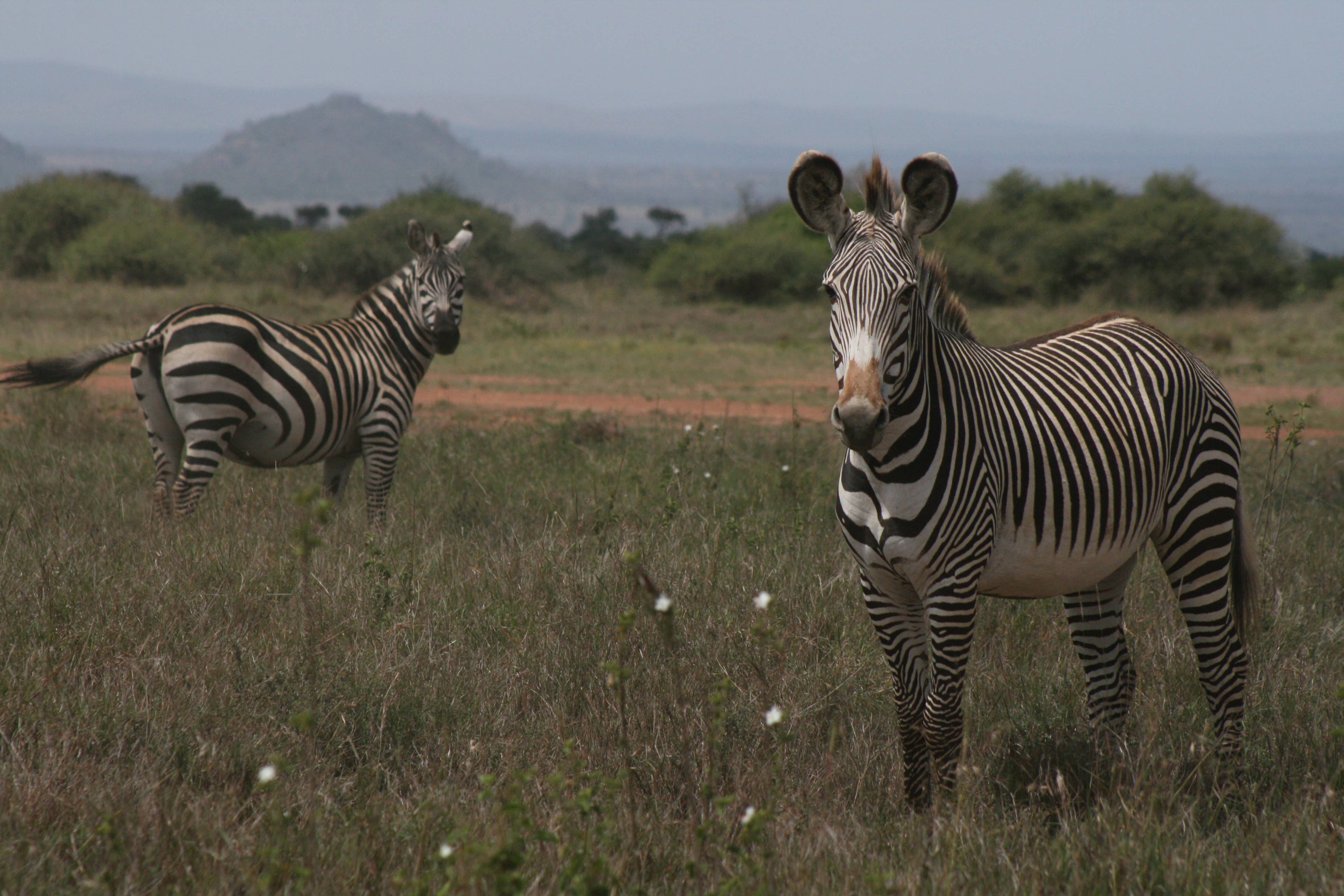 Different Stripes for Different Species