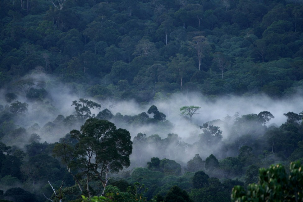 Hope for Rainforests through Technology