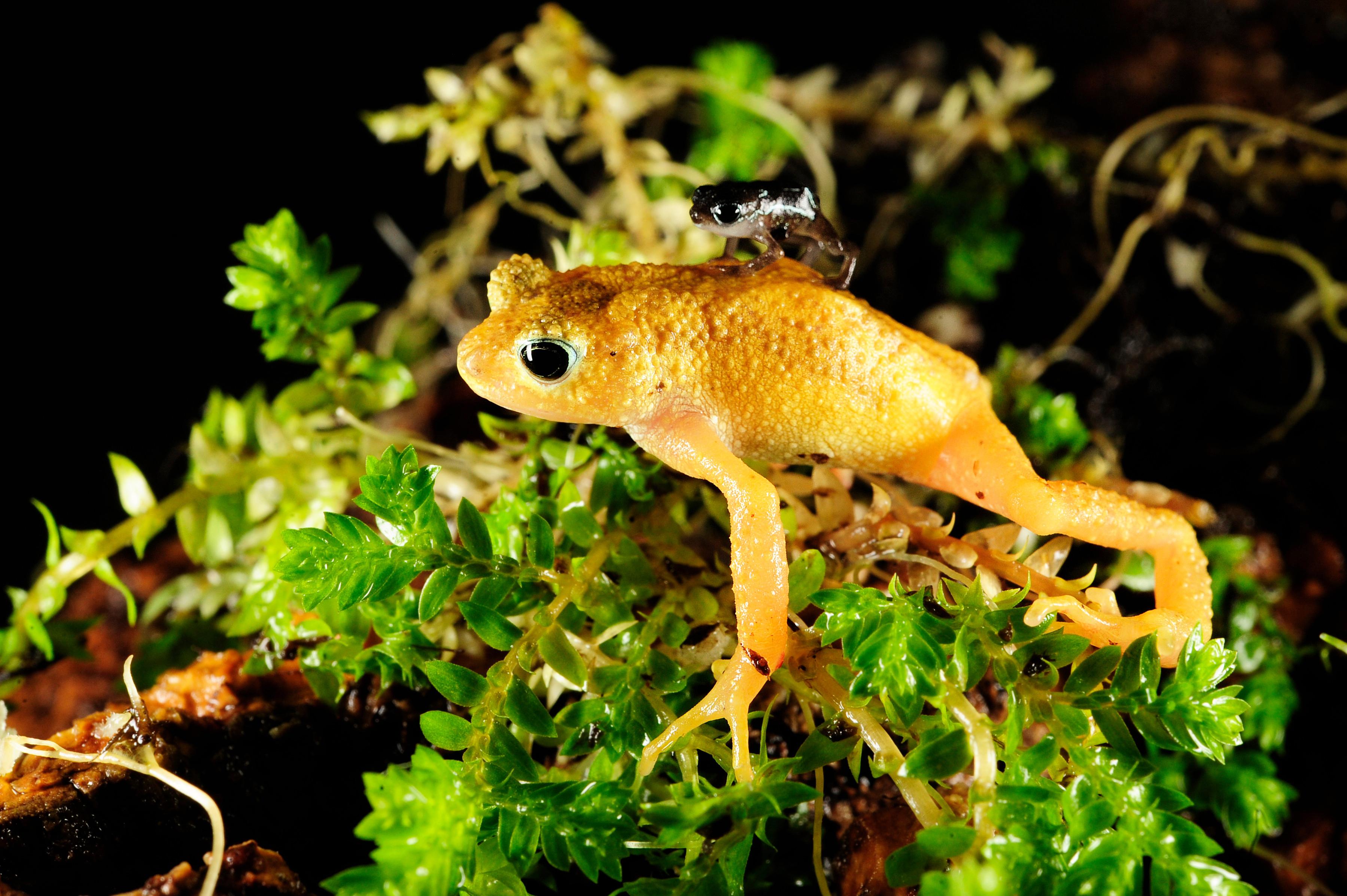 Menu for a Tiny Toad