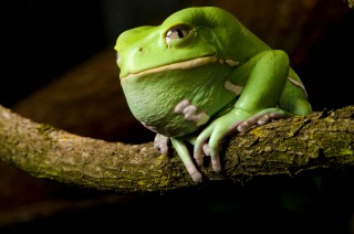 A Frog with Force