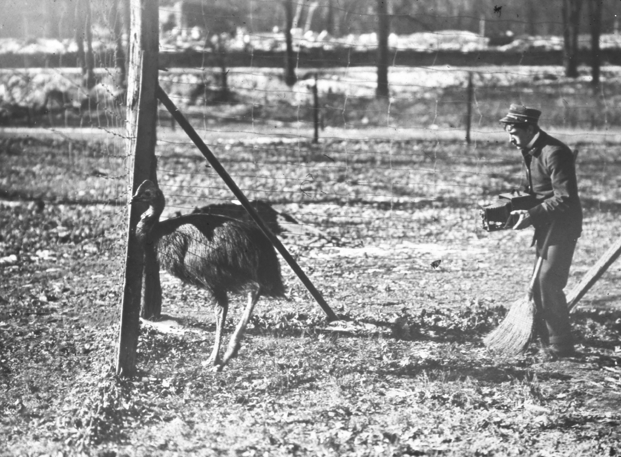 The First Photographer for the Bronx Zoo