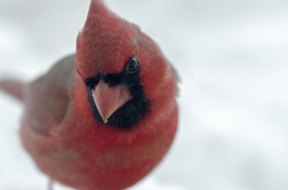 Backyard Bird List