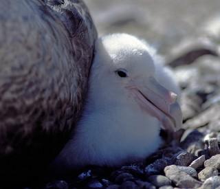 Oceanic Vulture, Part 1