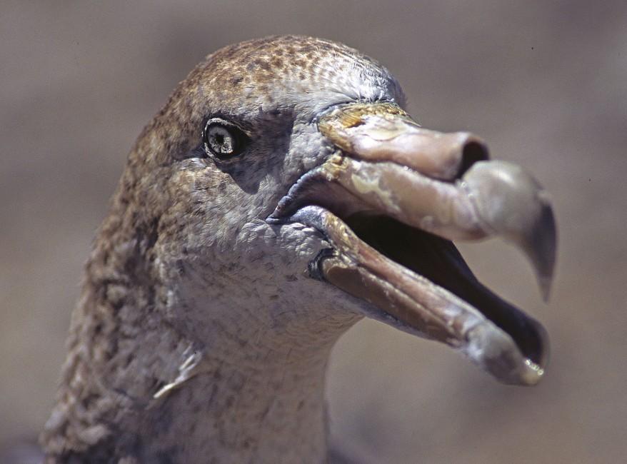 Oceanic Vulture, Part 2