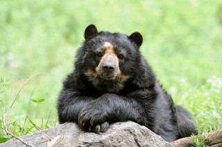 A Vulnerable Bear