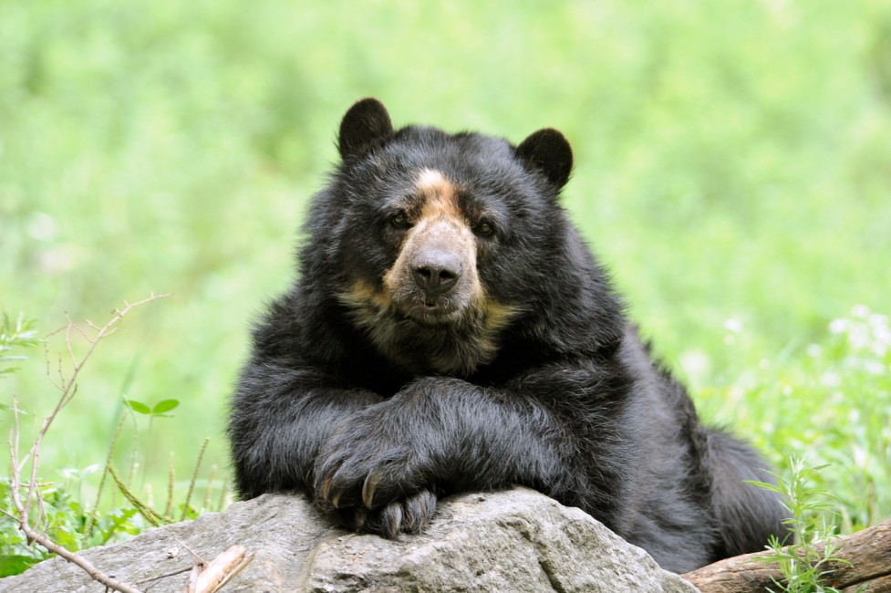 A Vulnerable Bear