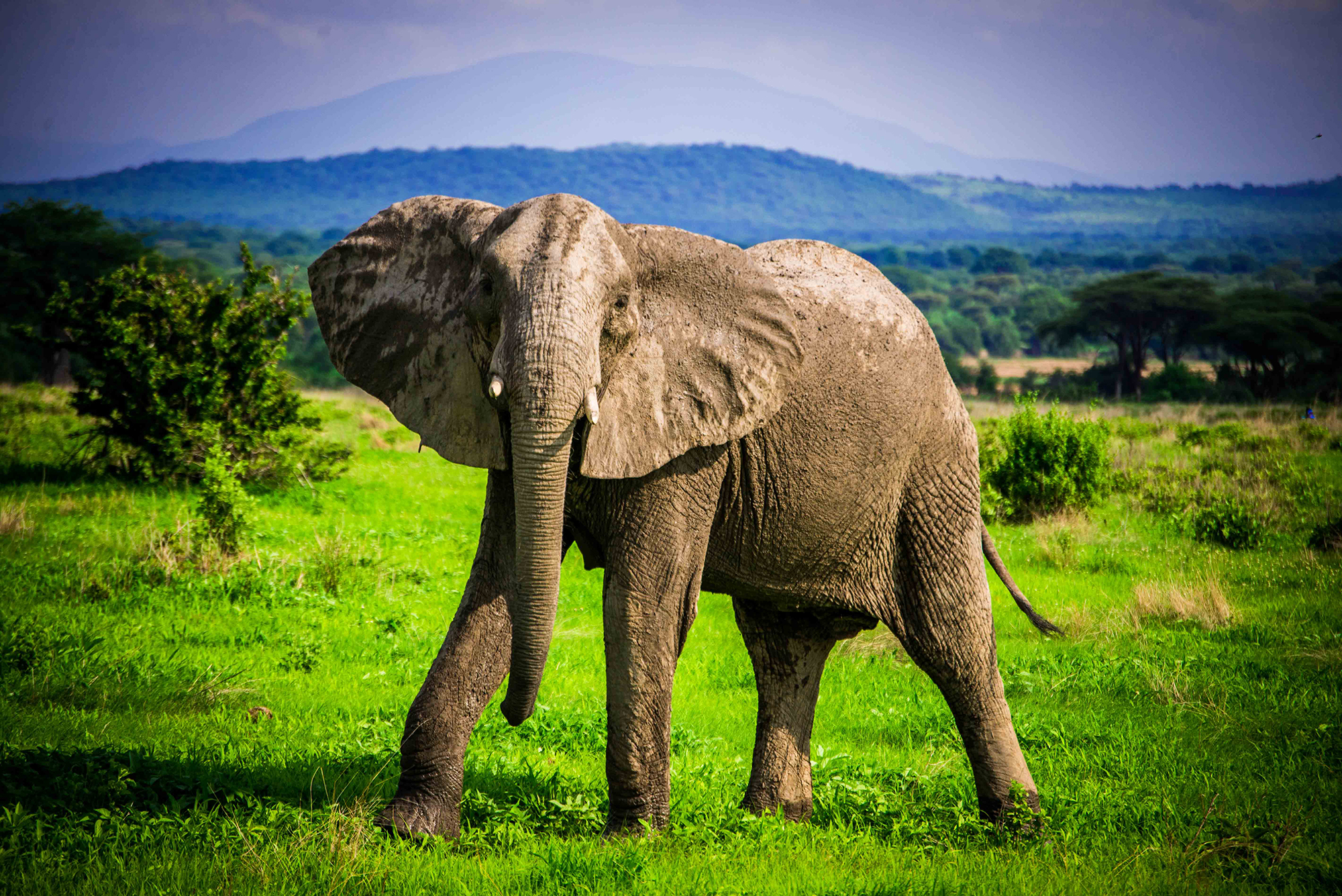 The REALLY Big Picture – World Elephant Day