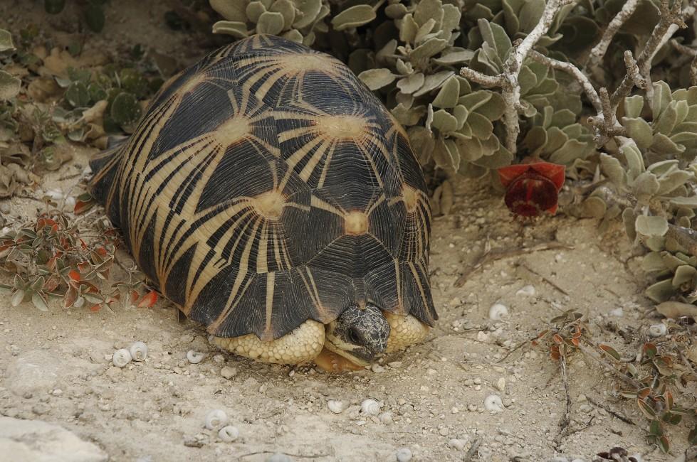 A Tortoise in Trouble