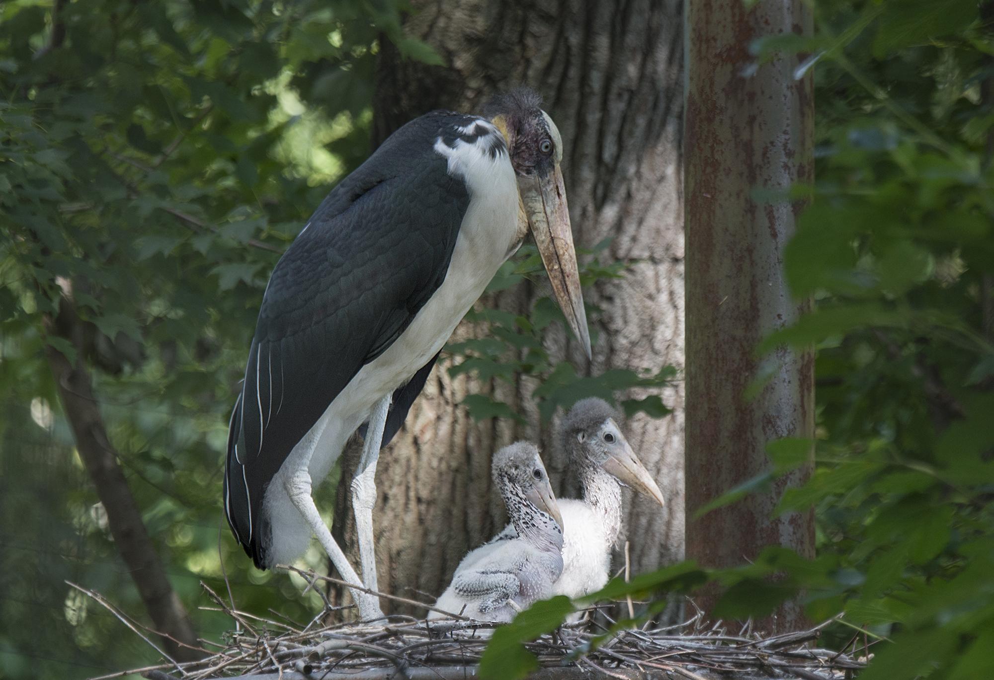 Stork Surrogates – Humans Dropped You Off