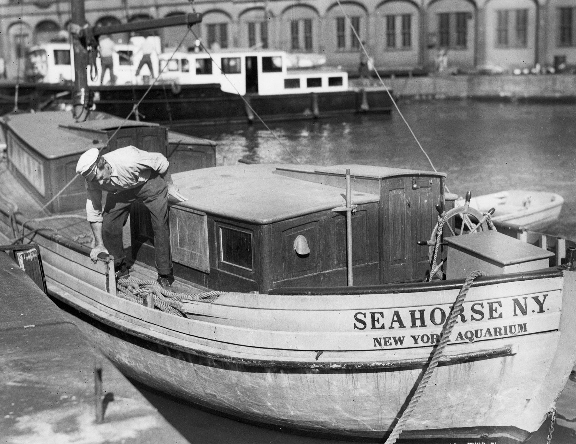 Ahoy, SS Seahorse