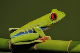 Little Green Creatures