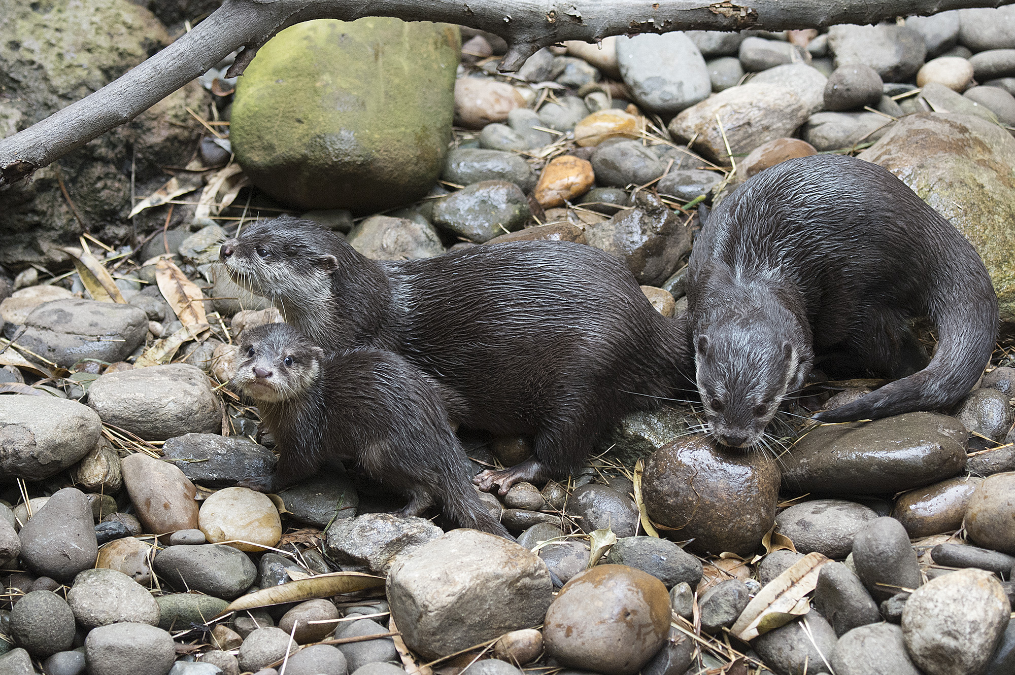 Otterly Awesome Parents