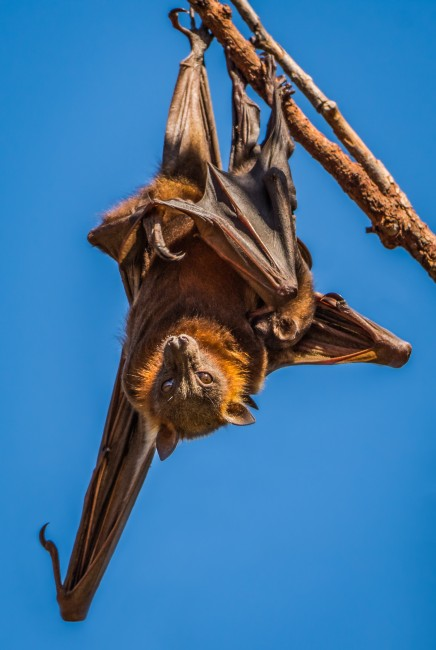 A Bat with Her Baby