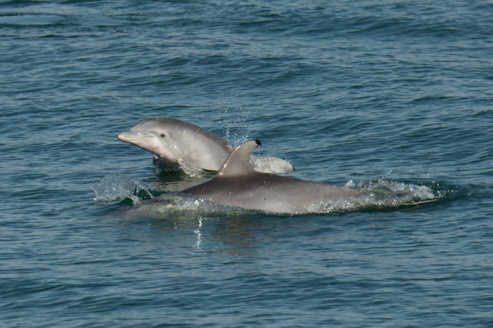 In the Company of Dolphins