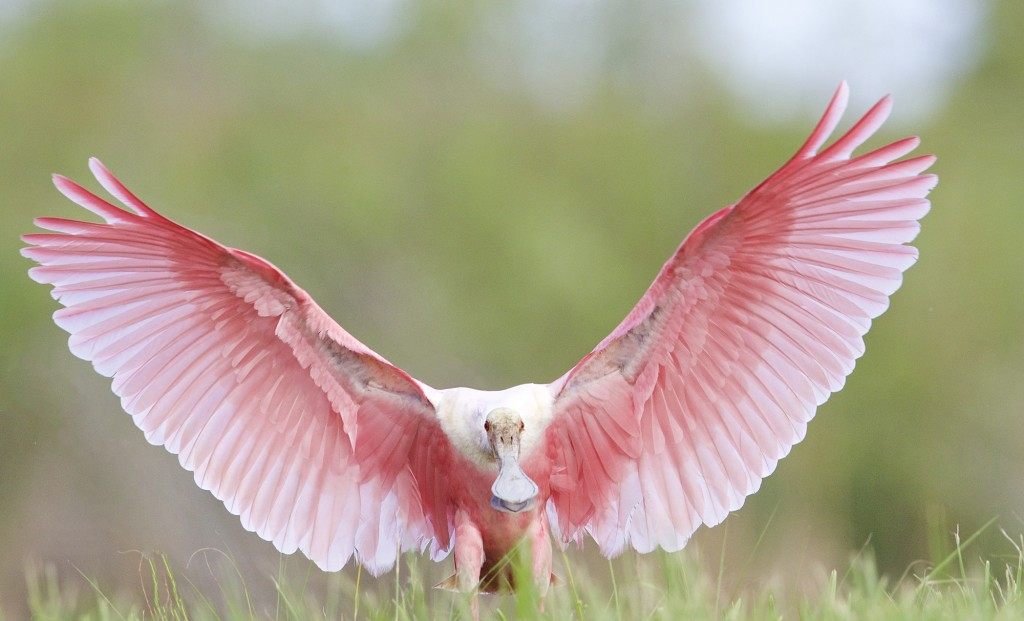 Pink Angel Touchdown