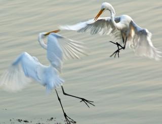 Big Bird Turf Battle