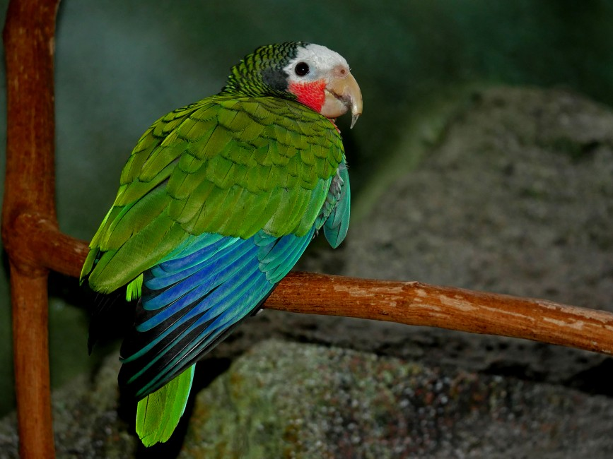 Green Parrot Party | Wild View