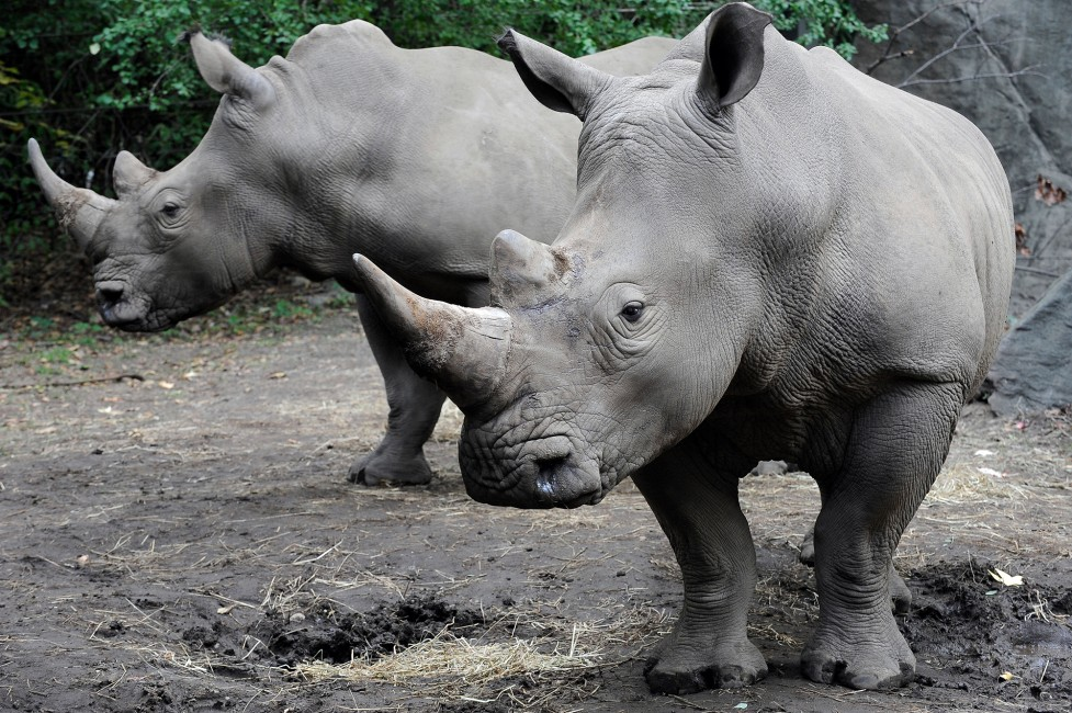 Weekend with Rhinos