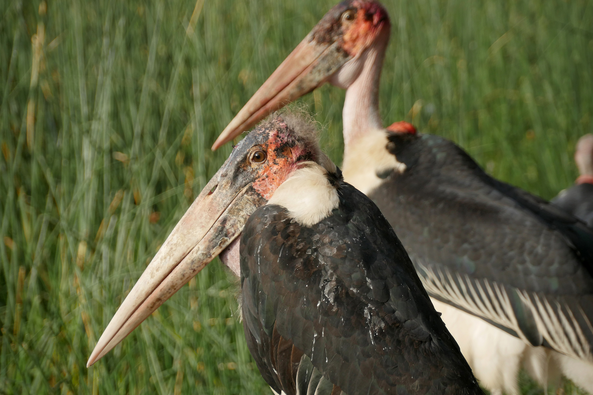 A Stork Brings Memories