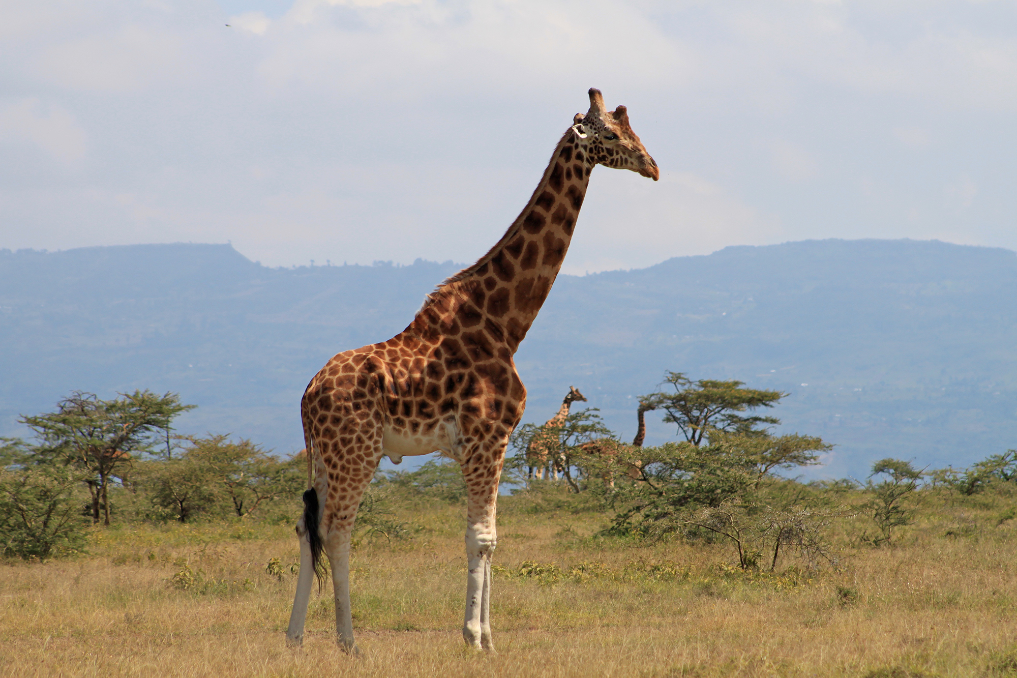Celebrate World Giraffe Day 2016