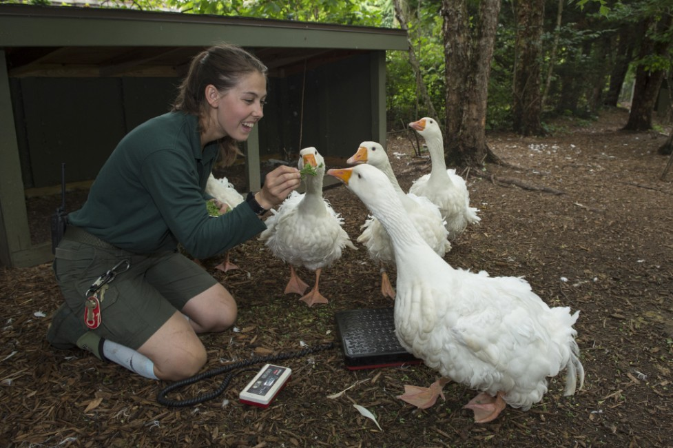 Geese That Gander