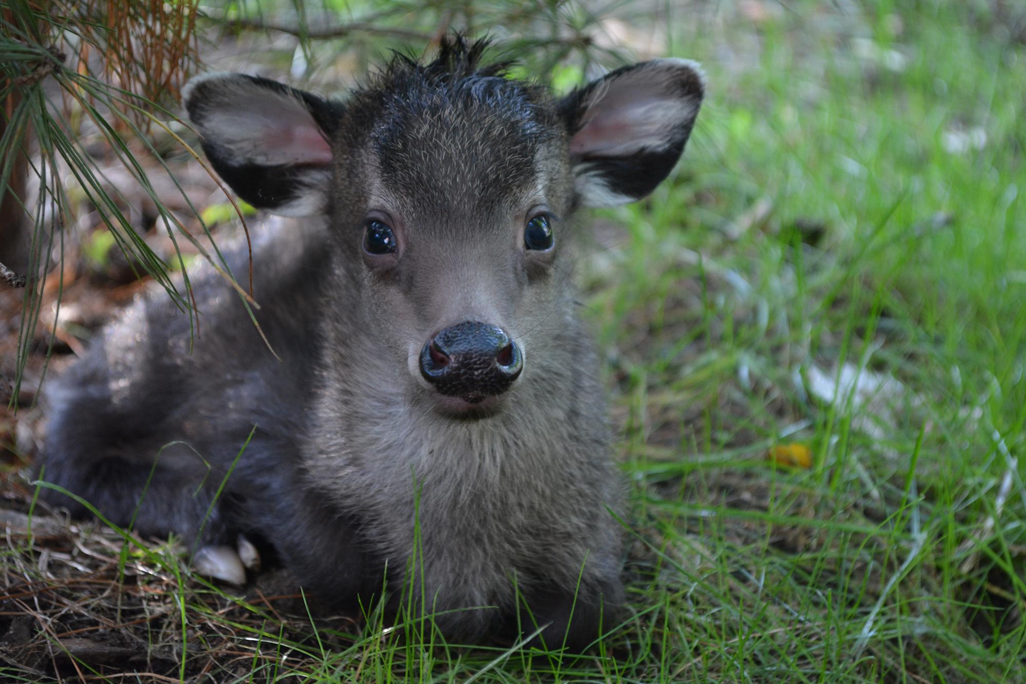 So Deer!