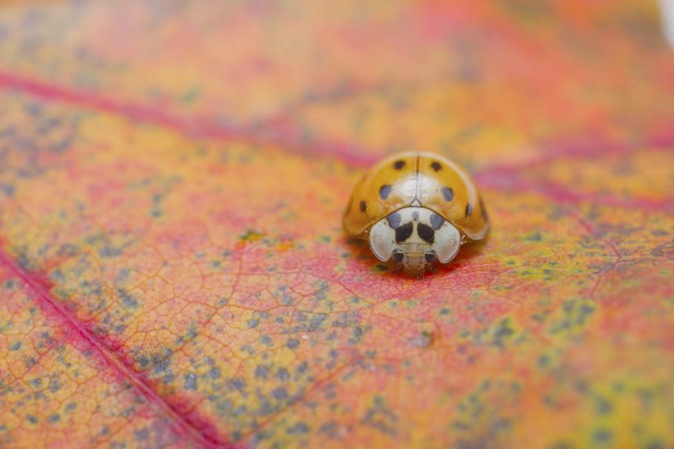 Camping with Ladybug