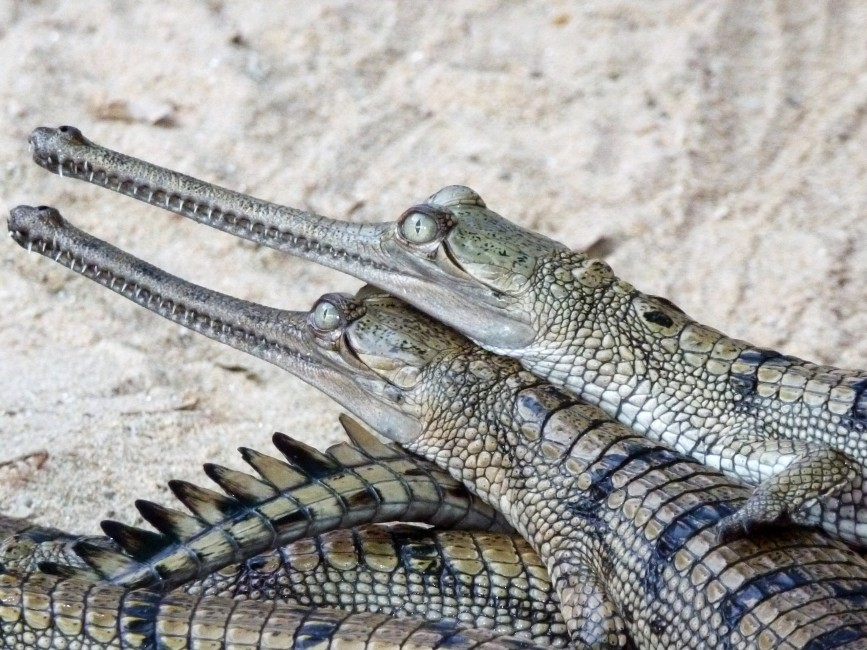 Gharial Day Care