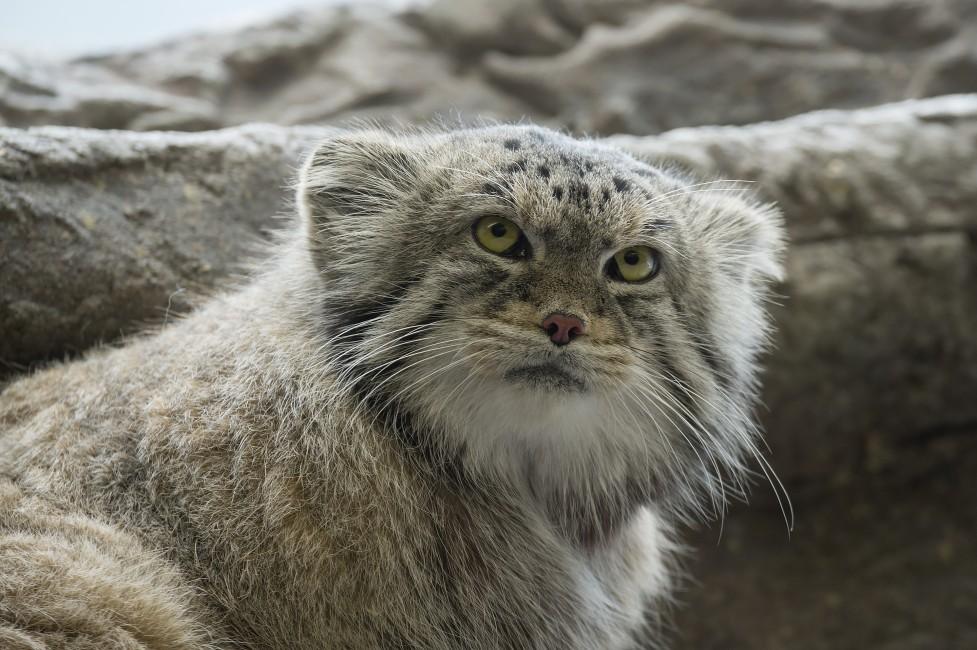 Kinship with a Grumpy Cat