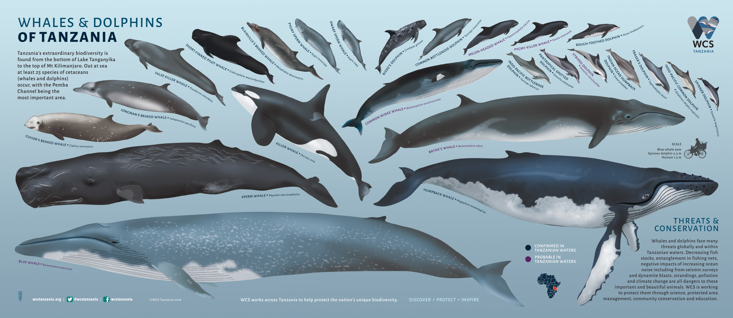 Whales and Dolphins of Tanzania