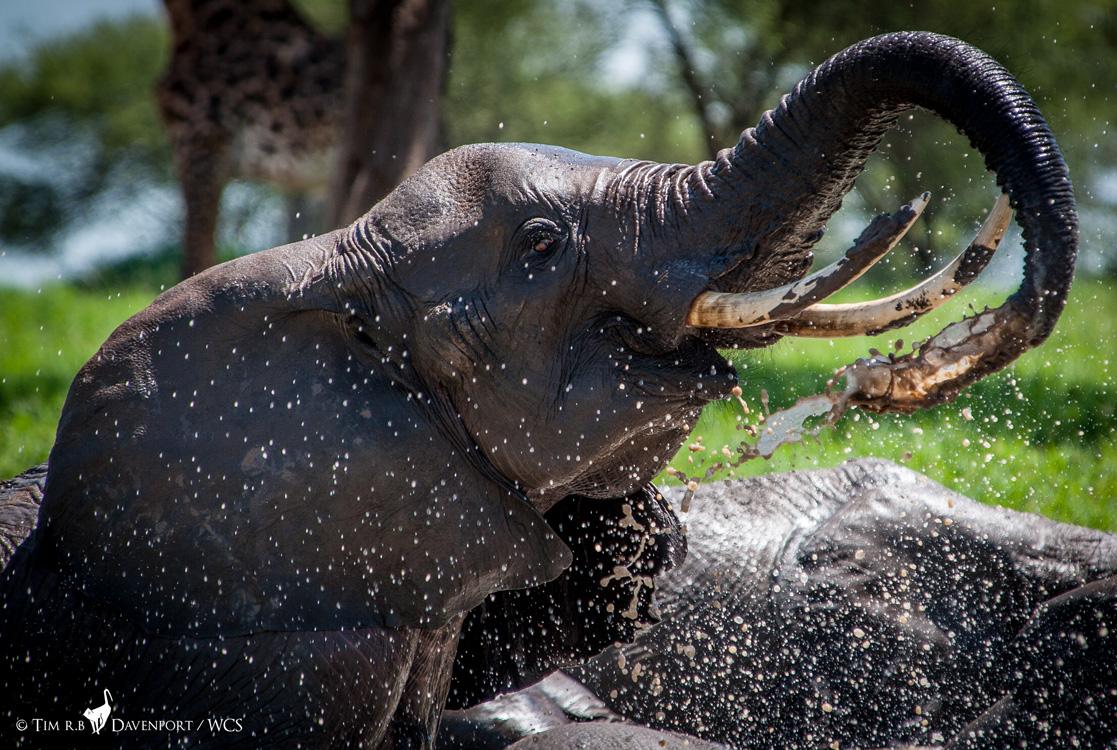 WCS Tanzania – Turning the Tide