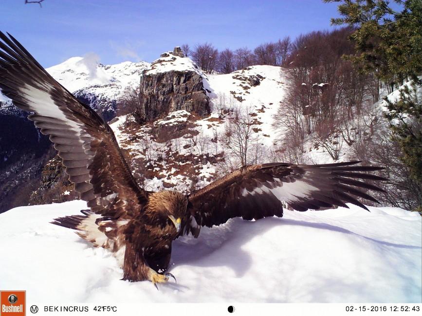 A Place Where Eagles Dare