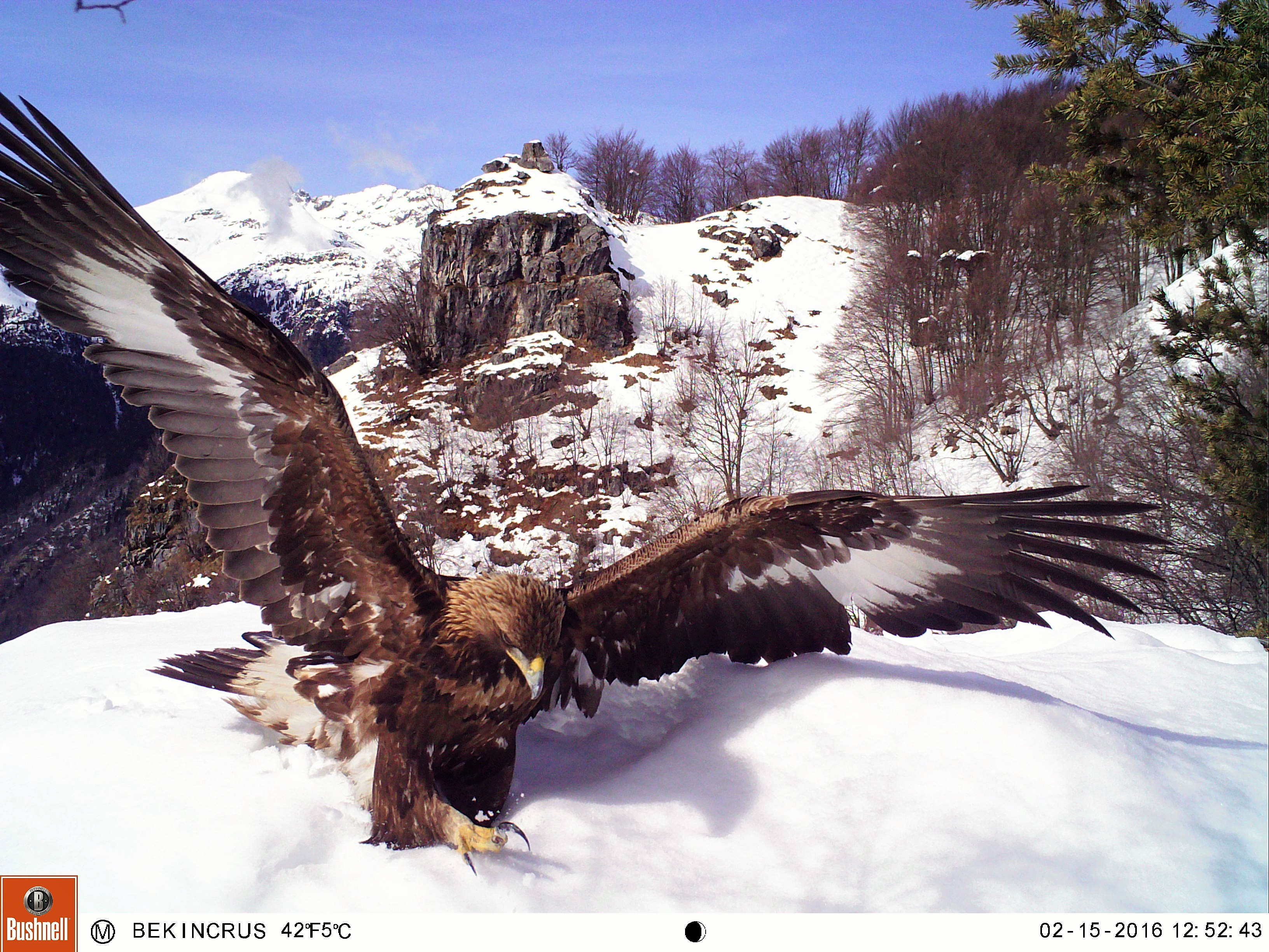 A Place Where Eagles Dare