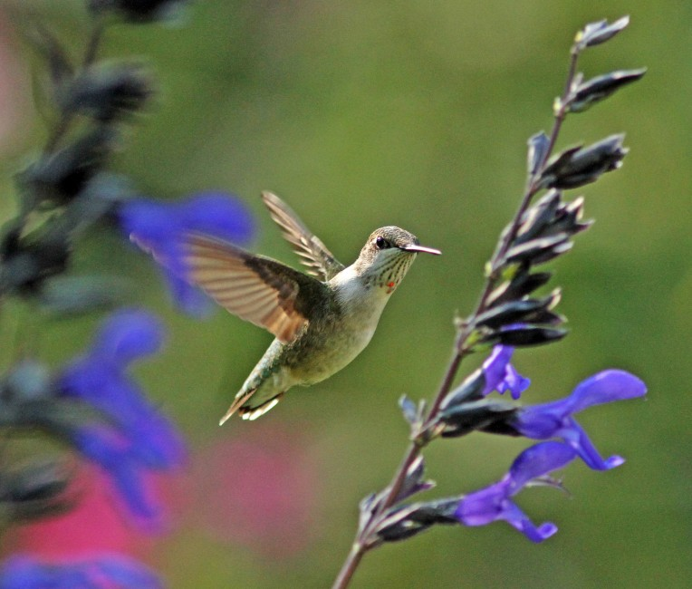 A Young Hummer
