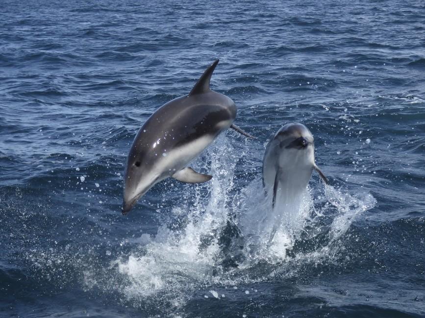 Olympians of the Ocean