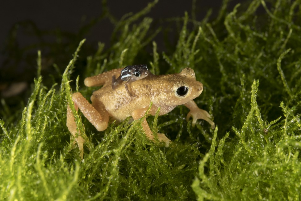 Tiny Toads: Back to Tanzania 2