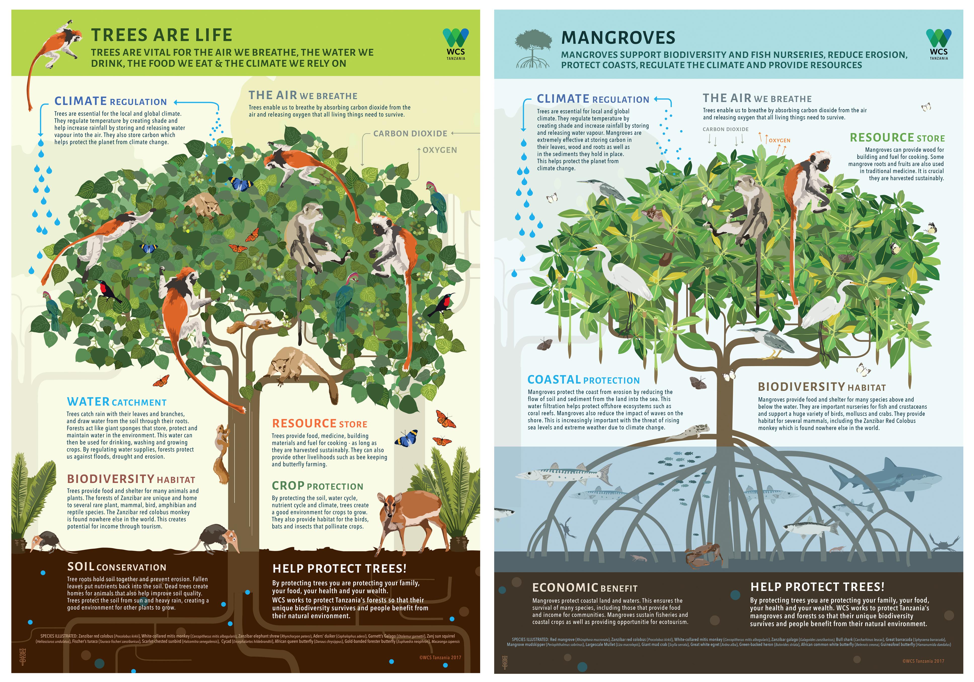 Saving Trees in Tanzania