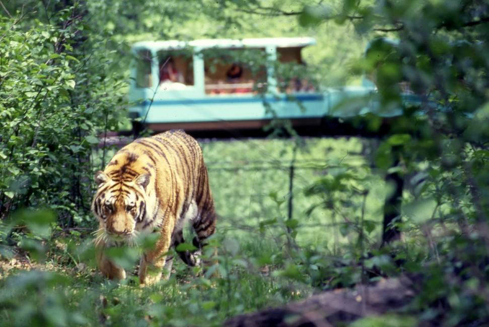 Happy 40th Anniversary, Bronx Zoo Monorail