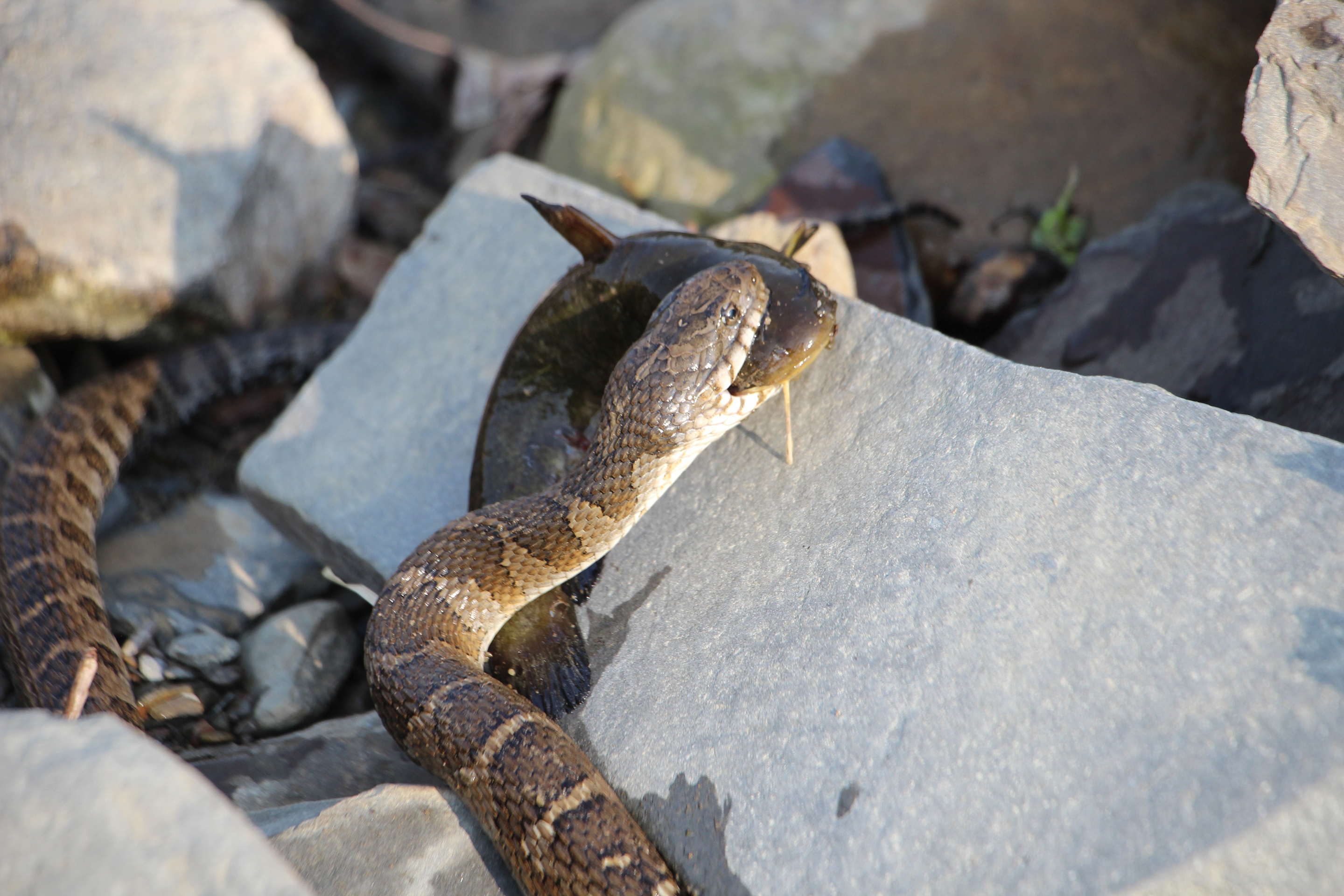 The Keuka Lake Snake