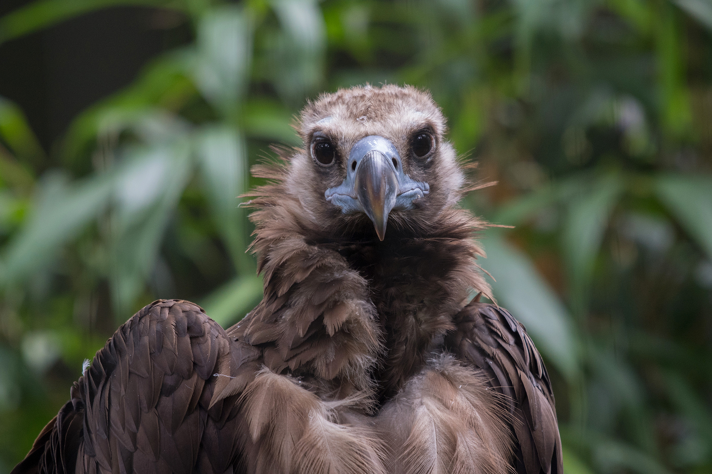 It's International Vulture Awareness Day